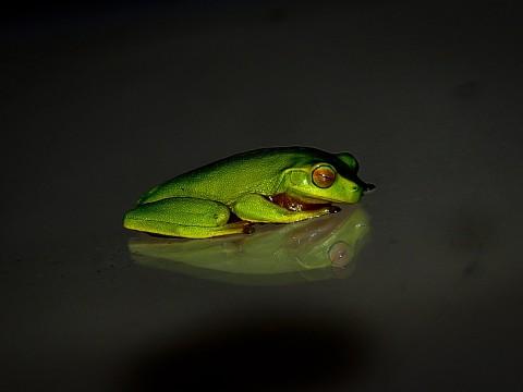 pexel frog