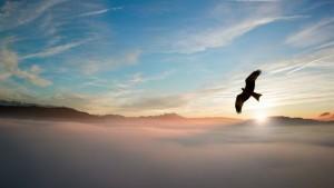 pexel eagle2